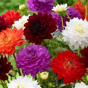 Корени на Цветя и Плодове