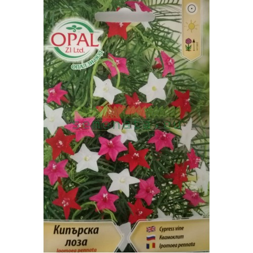Семена на увивна кипърска Лоза - Ipomea pennata