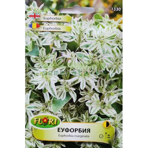Семена на Еуфорбия (Млечка)