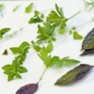 Семена на билки и подправки