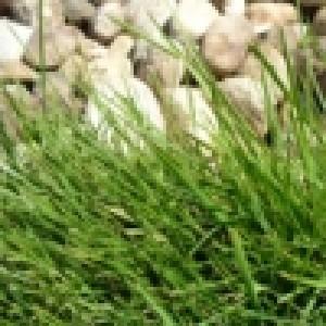 Тревни смески и чимове
